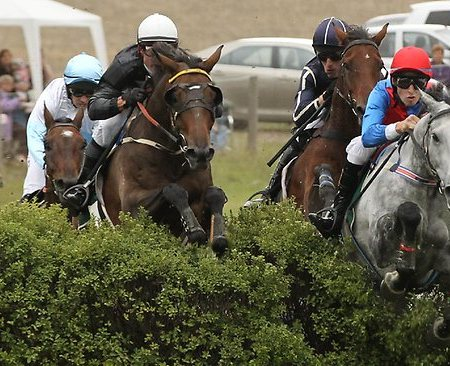 South Australian Jums Racing | Great Eastern Steeplechase 2014 | Lord of the Song