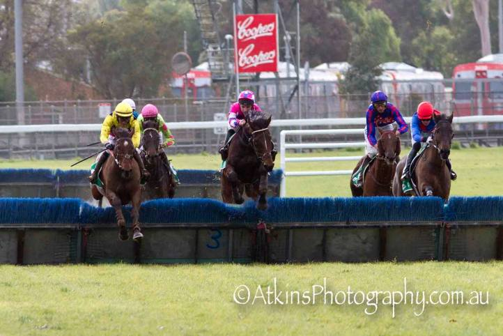 FELIX BAY, ridden by Steven Pateman, takes out the hurdle at Gawler on Saturday 13 July